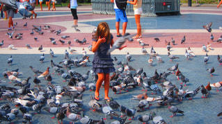 美少女と鳩の一瞬の写真・画像素材[2495860]