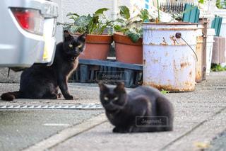 猫の写真・画像素材[2645782]