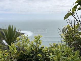 丘の上の草木達の写真・画像素材[2491776]