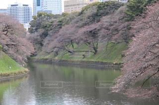 春の写真・画像素材[374722]