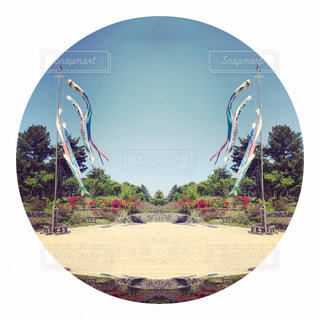 鯉のぼり🎏の写真・画像素材[2491656]