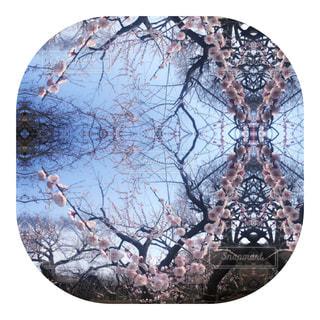 偕楽園の梅✨✨の写真・画像素材[2491875]