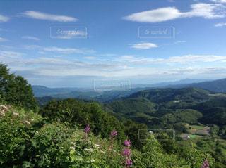 背景に山がある木の写真・画像素材[2492579]