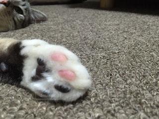 No.95924 猫