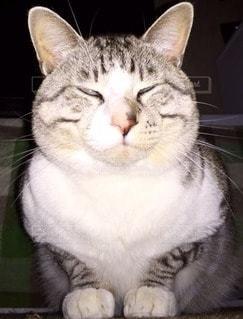 猫 - No.95988
