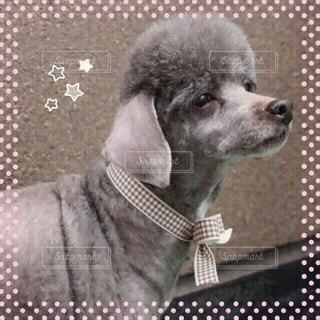 犬の写真・画像素材[108572]
