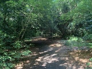 森の木の写真・画像素材[2495434]
