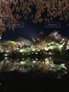 東寺の紅葉の写真・画像素材[2496587]