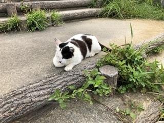 庭に座っている猫の写真・画像素材[2498258]