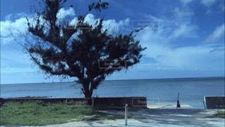水域の前の木の写真・画像素材[2503323]