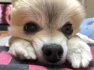 犬の写真・画像素材[2563330]