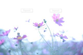 花のクローズアップの写真・画像素材[2501527]