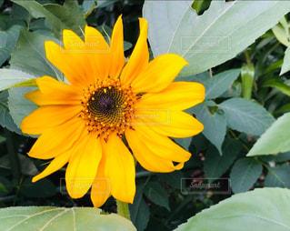 花の写真・画像素材[2654463]