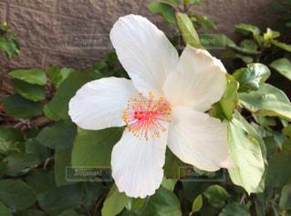 花の写真・画像素材[2654530]