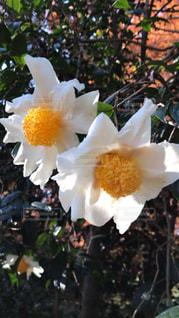 花の写真・画像素材[2654532]