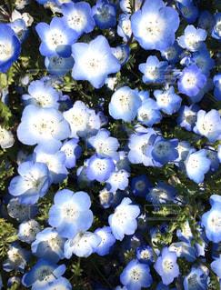 花の写真・画像素材[2654555]