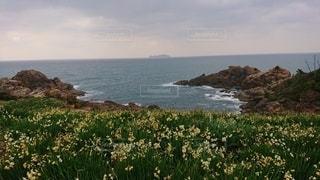 水仙公園の写真・画像素材[2500236]