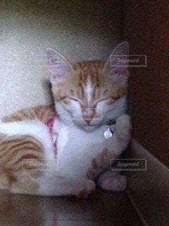 猫の写真・画像素材[96119]