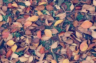 秋の写真・画像素材[2501355]