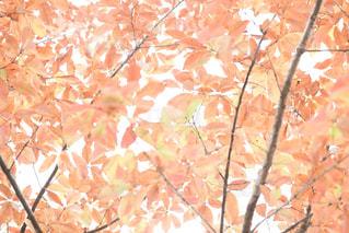 木のクローズアップの写真・画像素材[2501808]