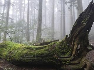 森の尊厳の写真・画像素材[2563122]
