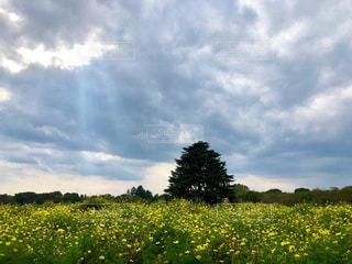 背景に木がある大きな緑の野原の写真・画像素材[2503183]