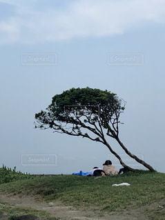 木下のカップルの写真・画像素材[2503373]