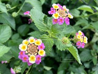 花のクローズアップの写真・画像素材[2503982]