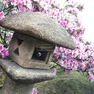 庭園にて。の写真・画像素材[2503803]