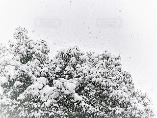 白黒の世界の写真・画像素材[4030180]