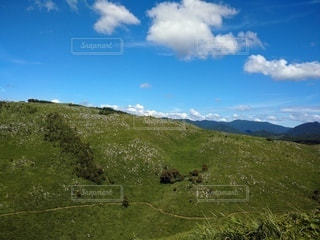 緑の野原のクローズアップの写真・画像素材[2504261]