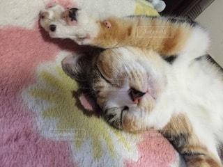 猫が好きの写真・画像素材[108479]