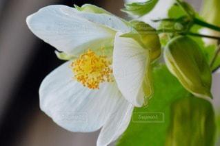 自然の写真・画像素材[96373]