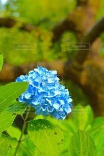 自然の写真・画像素材[96397]
