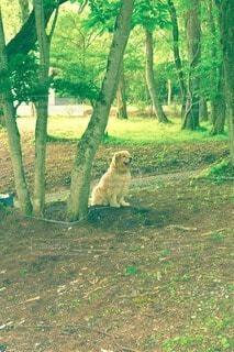 犬の写真・画像素材[118267]