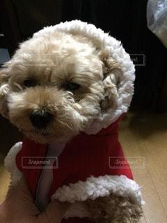 犬の写真・画像素材[96260]