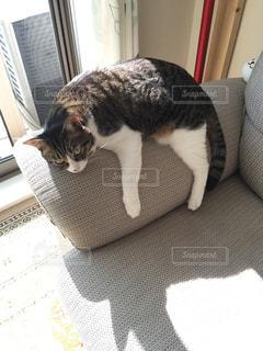 ダレる猫の写真・画像素材[2504851]