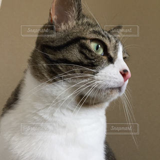 猫のクローズアップの写真・画像素材[2504855]