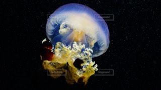 海の写真・画像素材[97798]