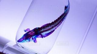 魚 - No.98140