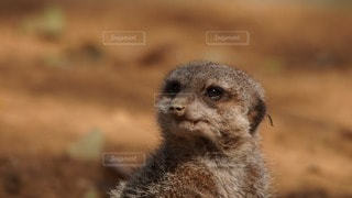 動物の写真・画像素材[99282]