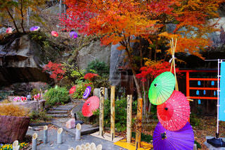 庭園に色とりどりの花のグループの写真・画像素材[890842]