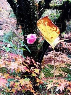 花と枯れ葉のミスマッチの写真・画像素材[2764969]