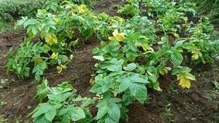 庭の緑の植物の写真・画像素材[2685542]