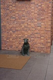 レンガ造りの建物の上を歩いている犬の写真・画像素材[2700120]