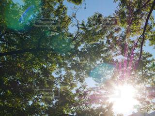 木と空と光の写真・画像素材[2708667]