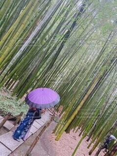 和傘をもつ女性の写真・画像素材[4083368]