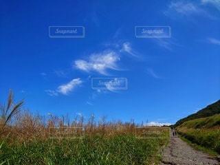 すすきと空の写真・画像素材[2607749]