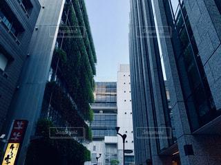 都会の緑の写真・画像素材[2595084]