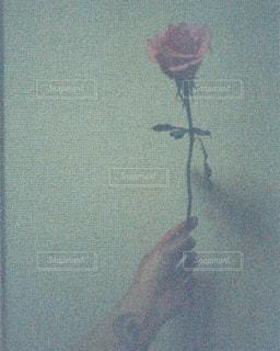 Roseの写真・画像素材[2513518]